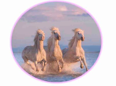 three white horses webversie